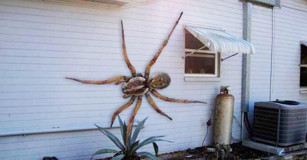 kamel edderkop