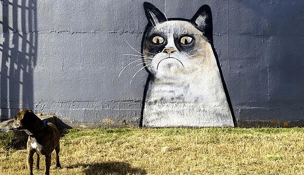 Paul Walsh grumpy cat