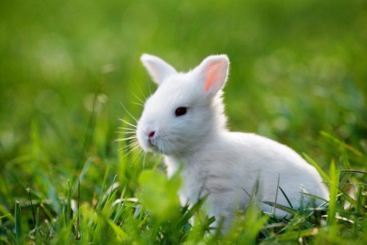 makeup mærker der ikke tester på dyr